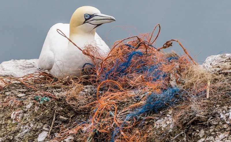 bird on pile of fishing nets