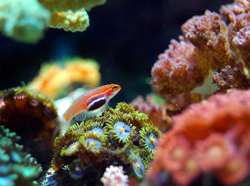 fish coral reef sea underwater