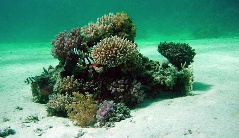 sea bottom coral