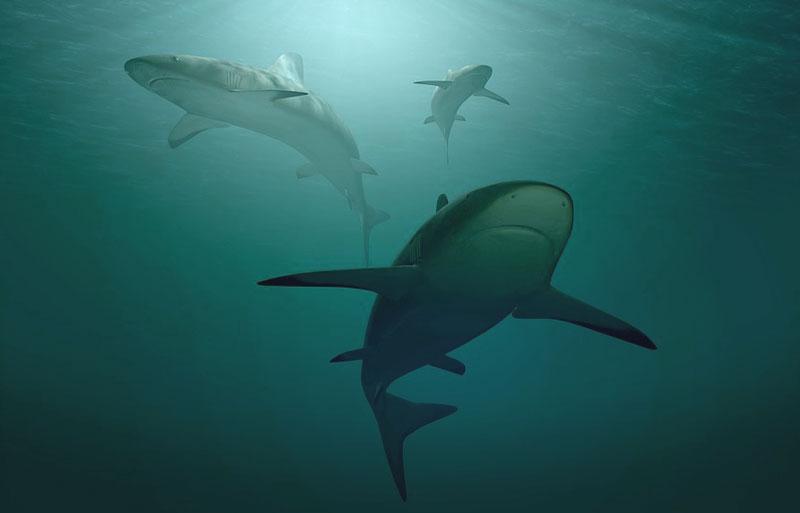 three sharks from below