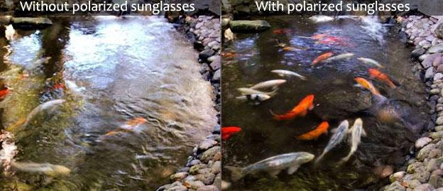 with polarized sunglasses vs without polarization